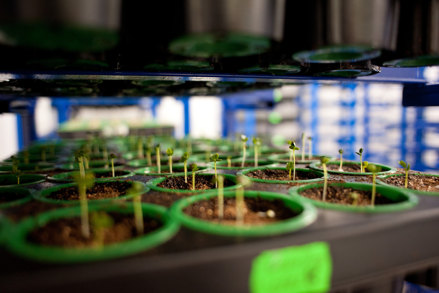 How do we make 100% seeds sprout