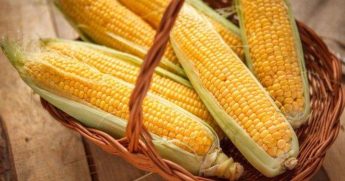 Ооо элеватор кбр терек семена кукурузы цена транспортер германия