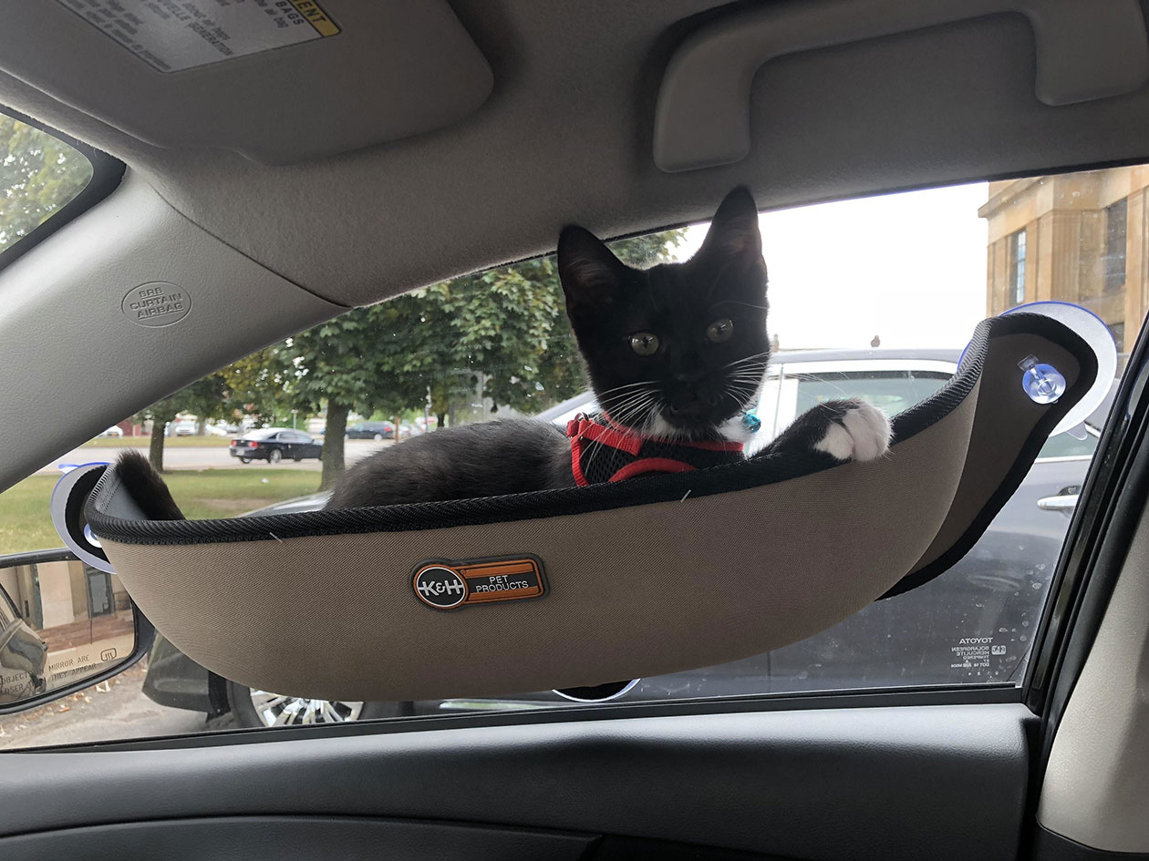 Перевозка кошки в автомобиле
