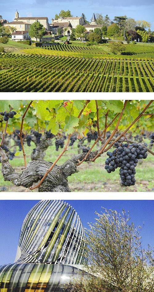 Бесконечные ряды виноградной лозы в Бордо