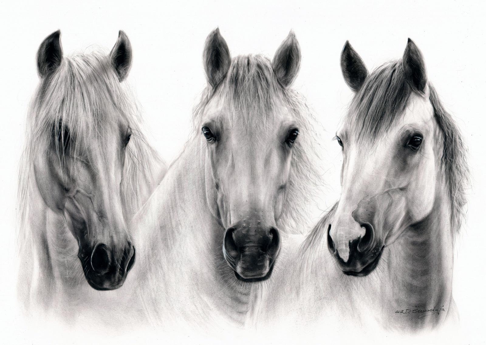 Pet Portrait Wildlife Artist Danguole Serstinskaja Equine Art