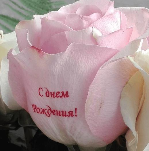 школе розы с поздравлениями на лепестках это