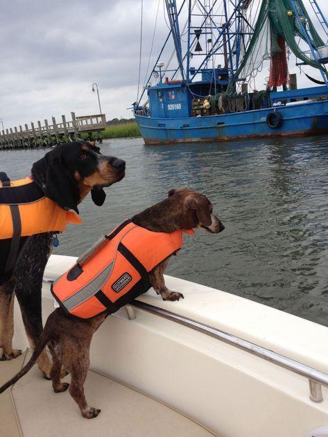 Не оставляйте питомца на берегу. Берите с собой на яхту.