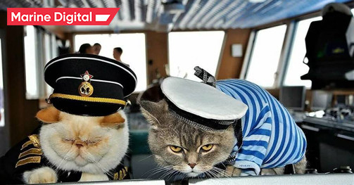 Five of the most famous animals in Maritime Navigation