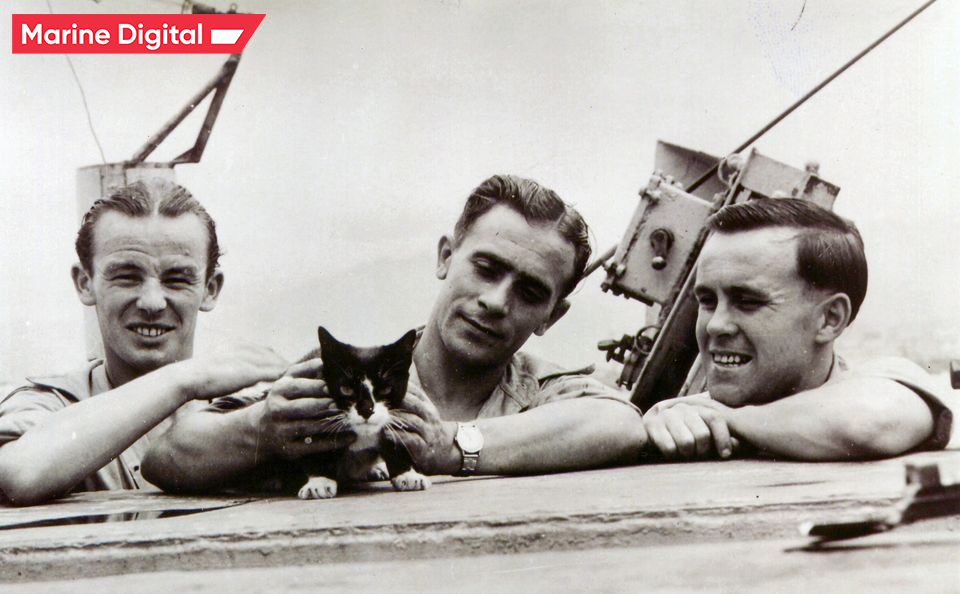 Simon the cat that received the Mary Deakin Medal