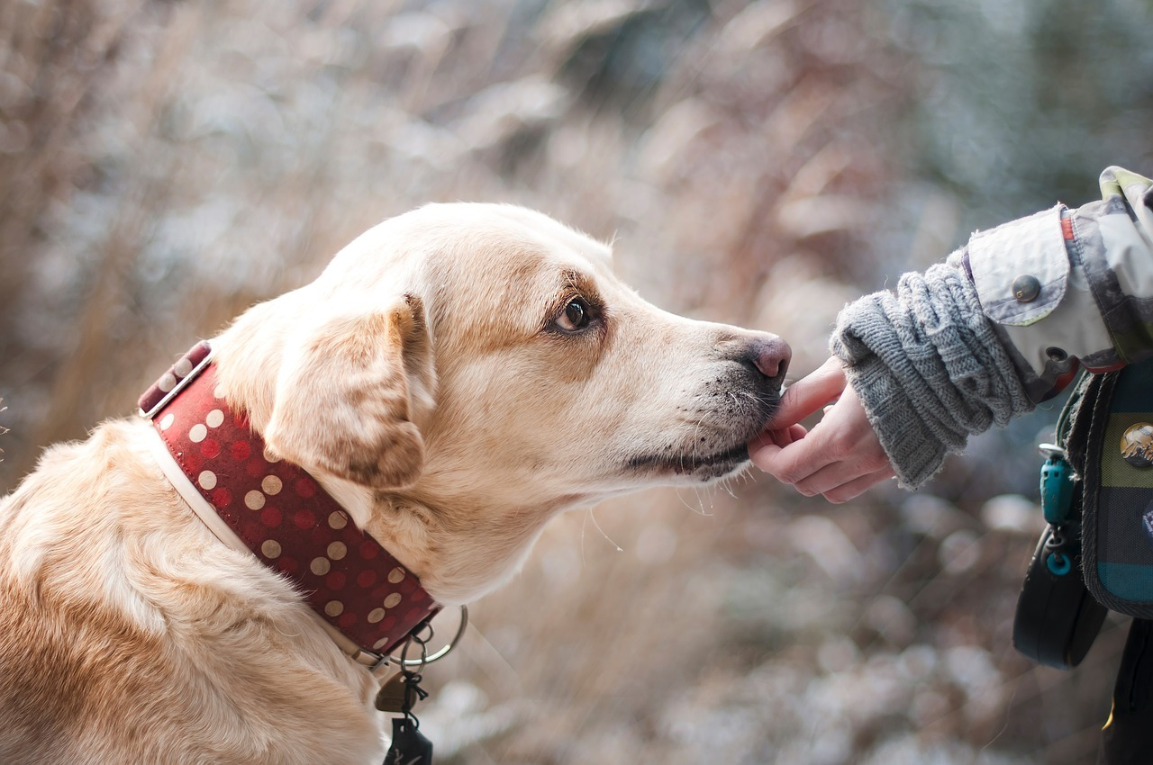How Much Can You Earn with a Dog Walking Gig?