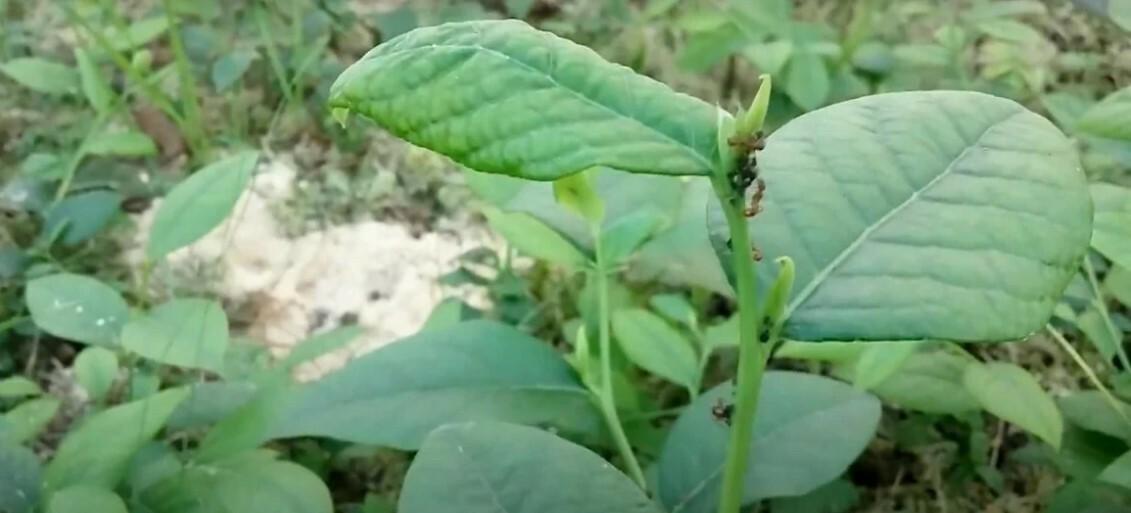 Своевременная обработка инсектицидами предупреждает повреждение растений популяциями вредных насекомых