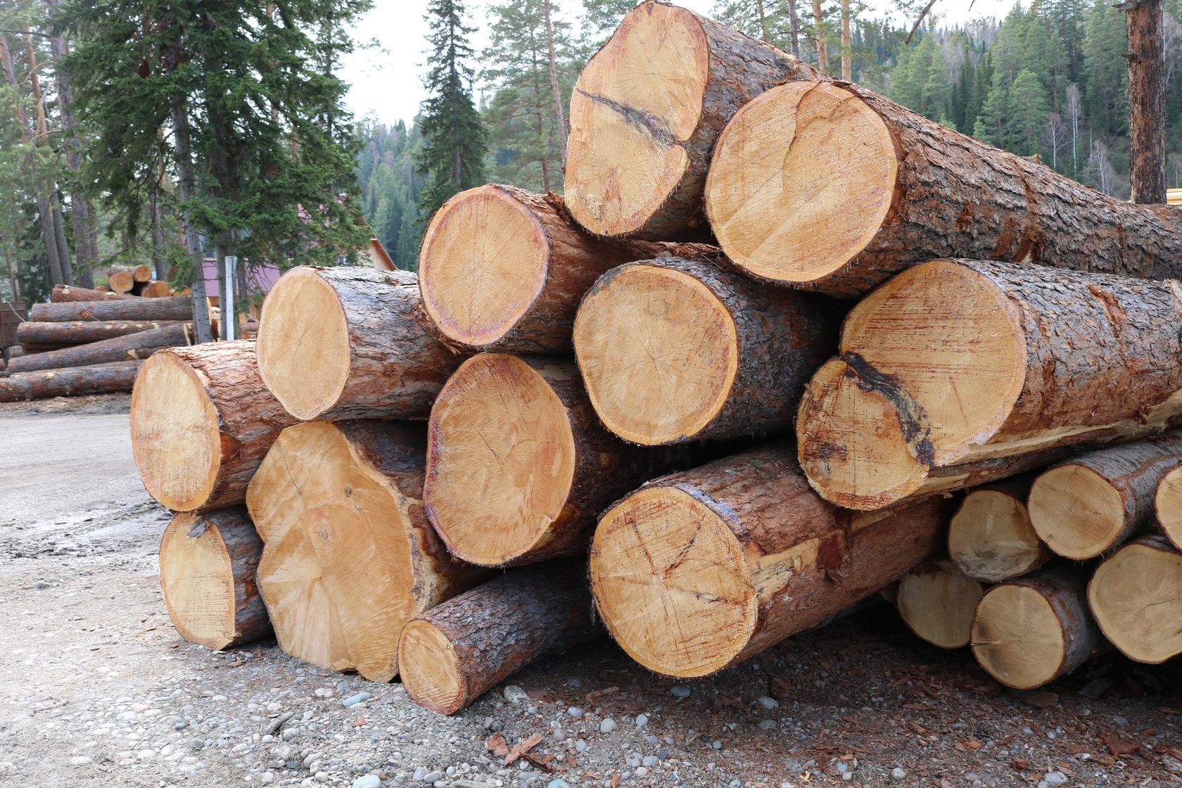 лес на корню для строительства дома