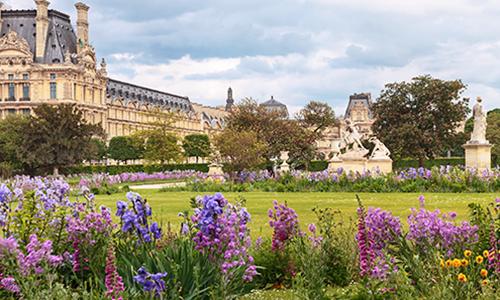 Люпины и пионы в саду возле Лувра