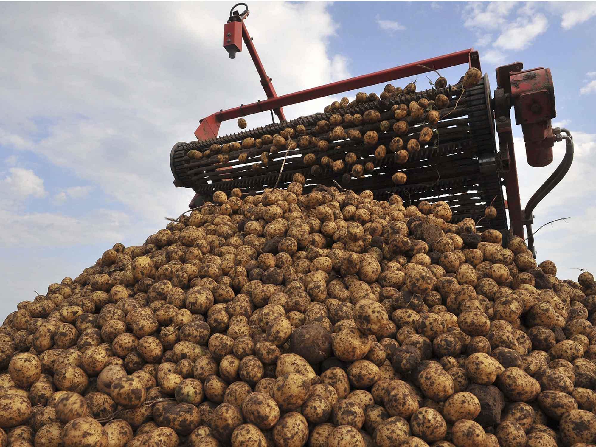 картинки сбор последней картошки касается