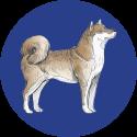 UA.DOG