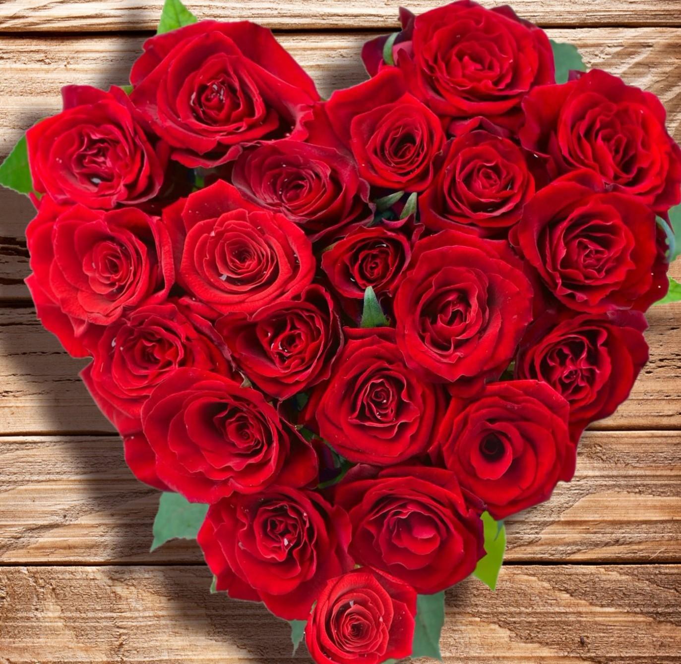 картинки алые розы большие трубы