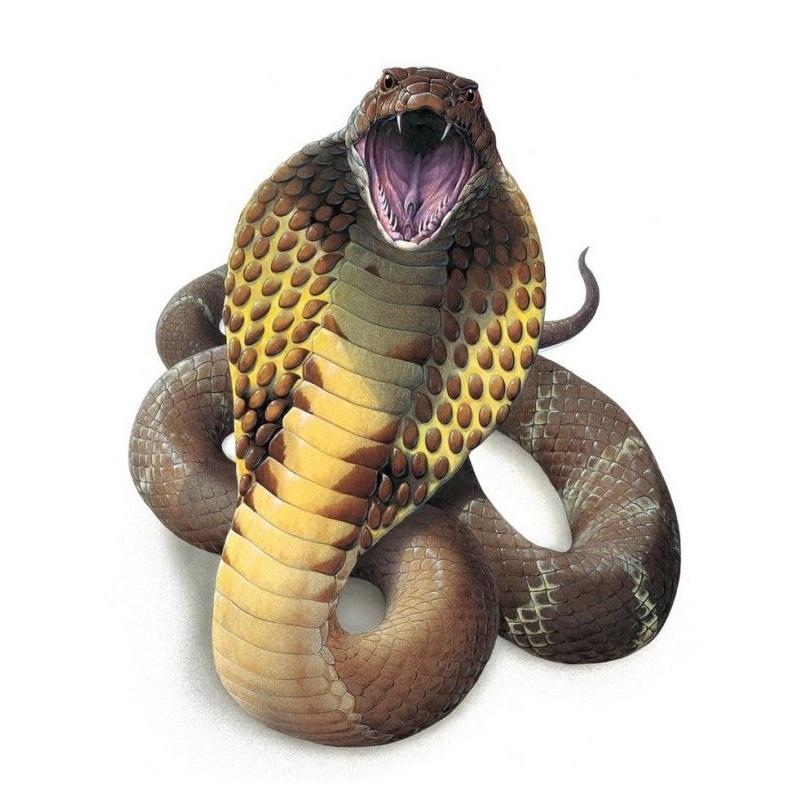 змея из аспидов мамба