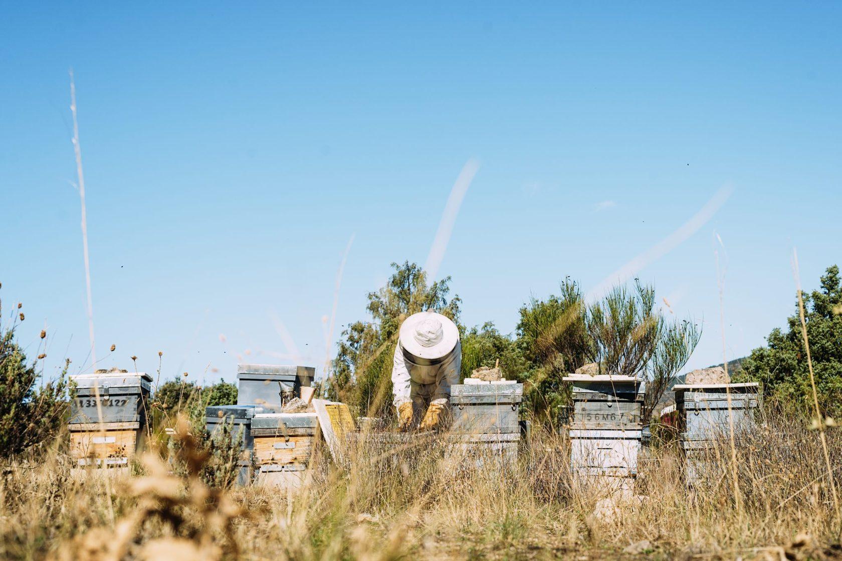 Купить пчелопакет у цебро
