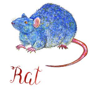 старшим гороскоп для крысы на 2018 термобелья