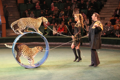 Хотят запретить использование животных в цирке