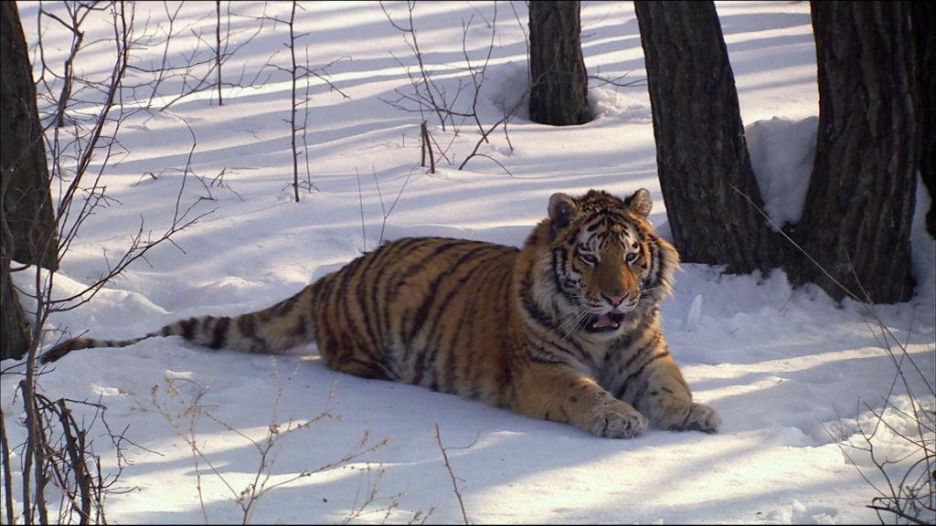 Travel Wildlife Travel Agency Wildlife Travel Wildlife Agency JTclK1F