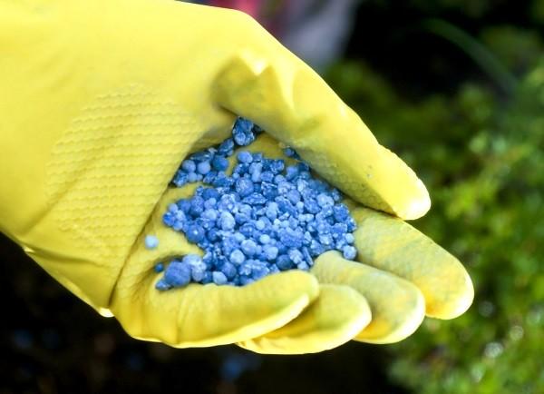 В качестве удобрения можно использовать готовые составы, насыщенные калием, азотом и фосфором, подходящие по времени года.