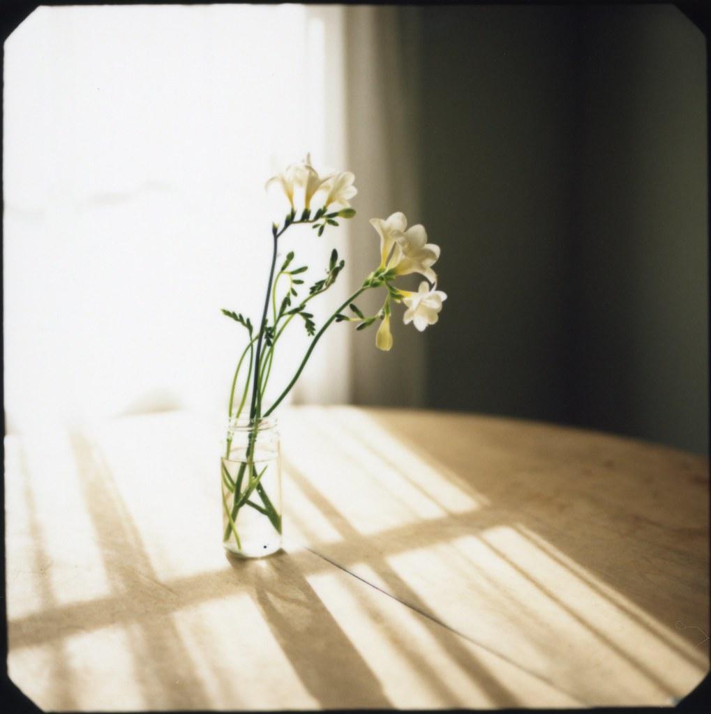 Пример фотографии на Fujifilm FP-100 C