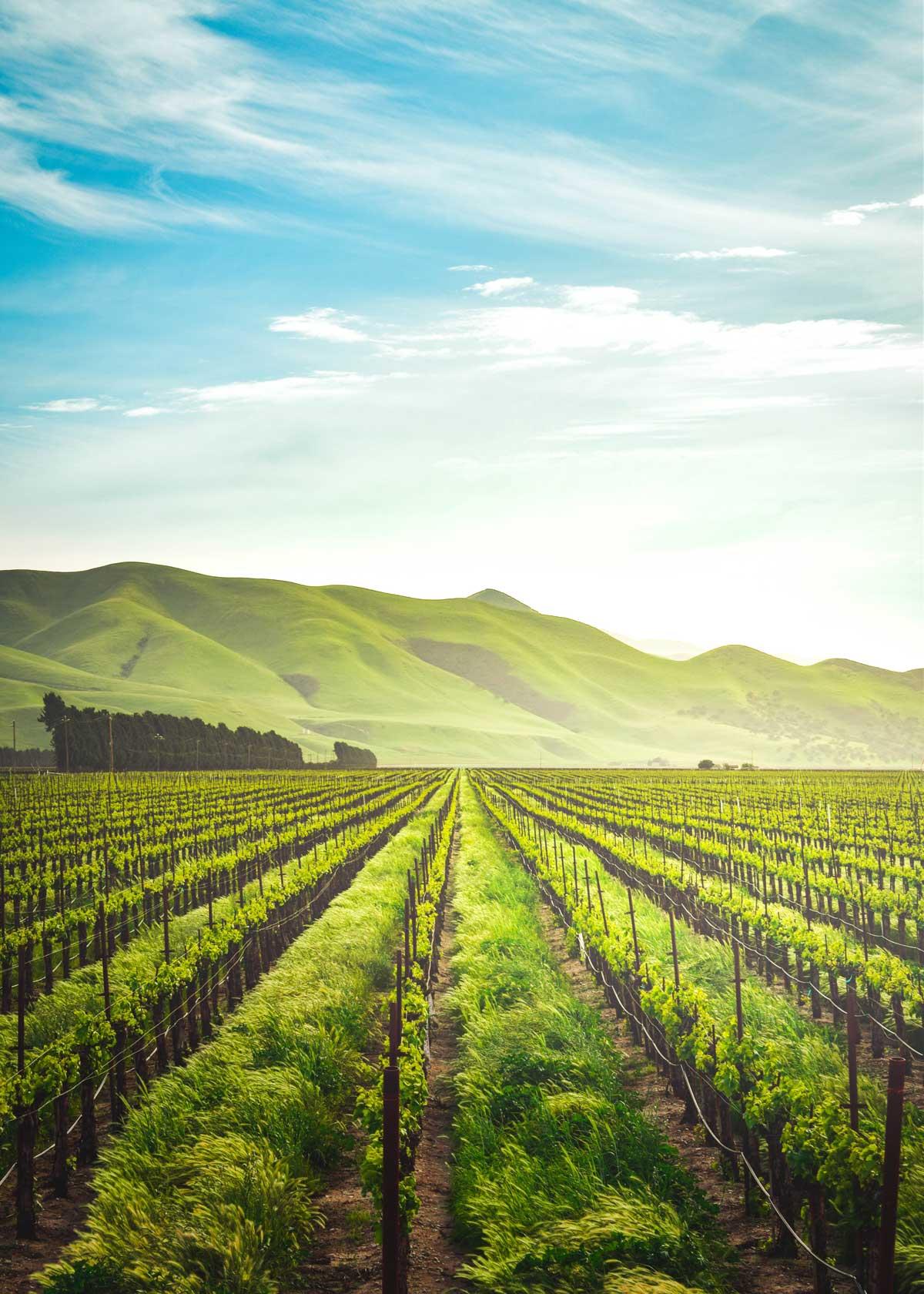 Виноградники Франции, провинция Шампань