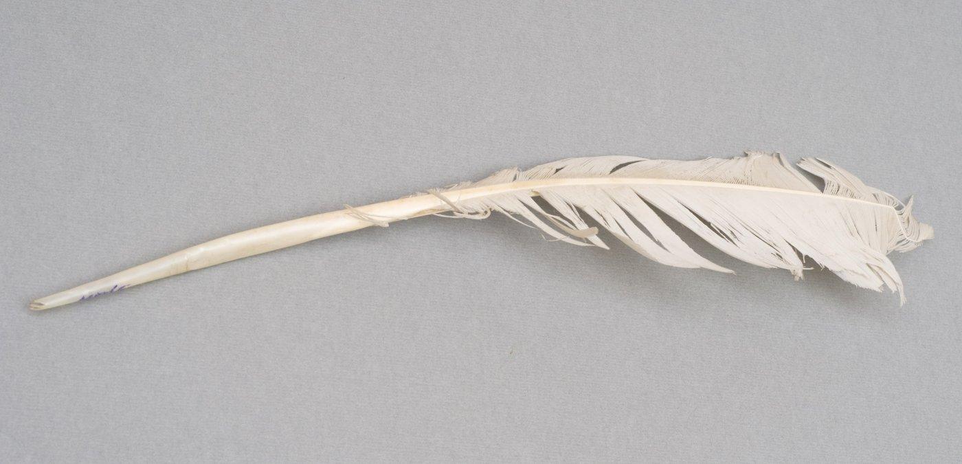 реальная картинка гусиные перья которые в то время использовали для письма прыщей активно применяется