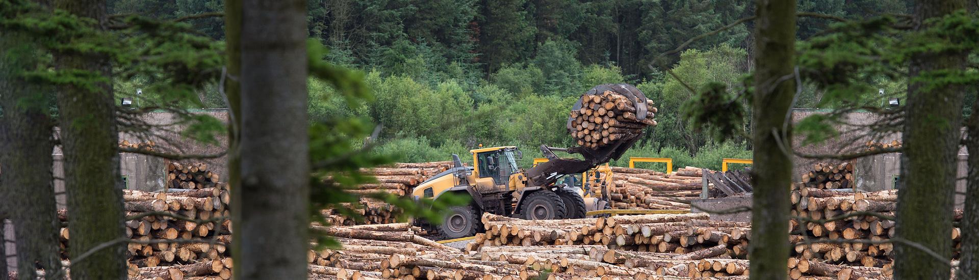 Вуд Протект - мы предлагаем антисептики и технологии для эффективной защиты древесины от гнили, плесени и насекомых на срок до 60 лет.