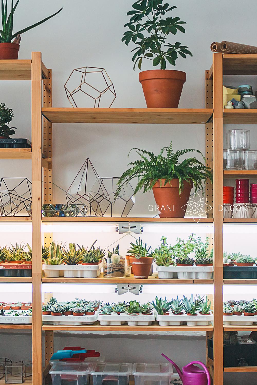 большой деревянный стеллаж с подсветкой и большим ассортиментом суккулентов и кактусов, а также флорариумов и террариумов