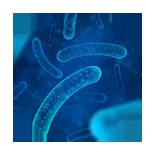 BIO MAMPs - Lactobacillus plantarum