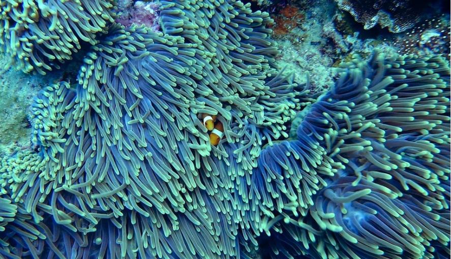 измерение шума под водой