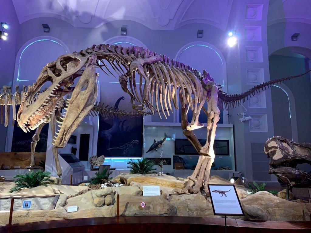 Музей естествознания в Хельсинки. Популярные музеи Хельсинки