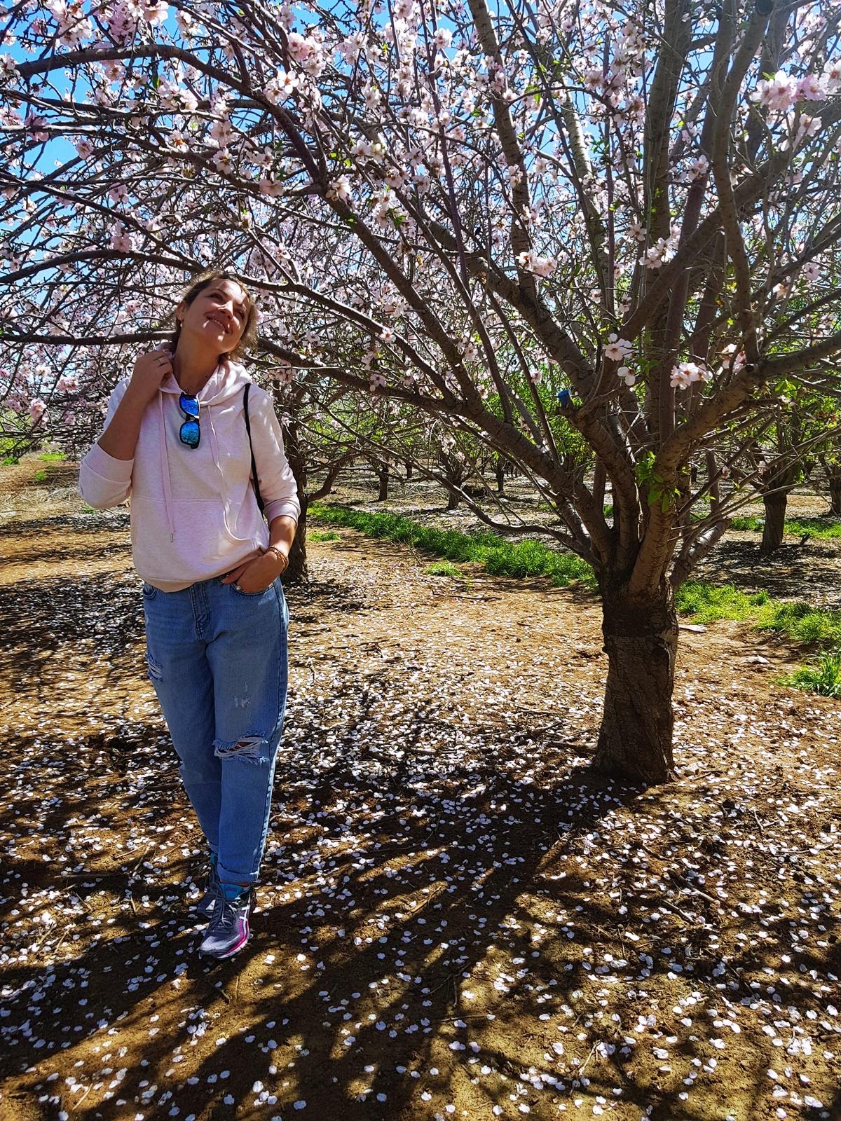 Цветущий миндаль в Израиле. Иля Антеби.