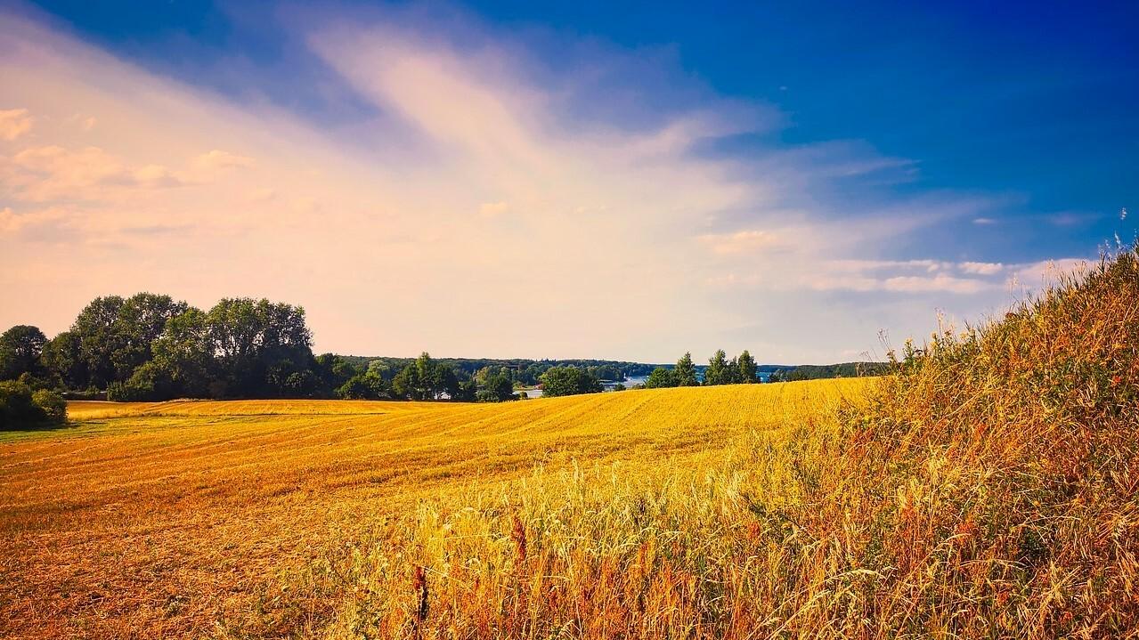 Крупным землевладельцам с 1 июля могут разрешить отбирать участки у дачников и фермеров