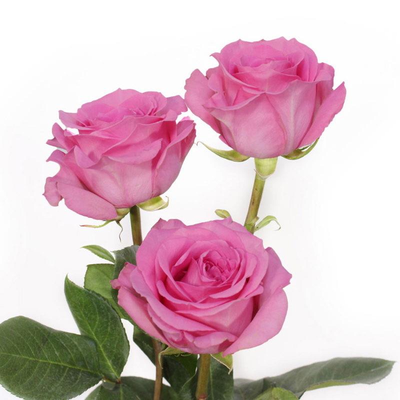 купить розы оптом в москве