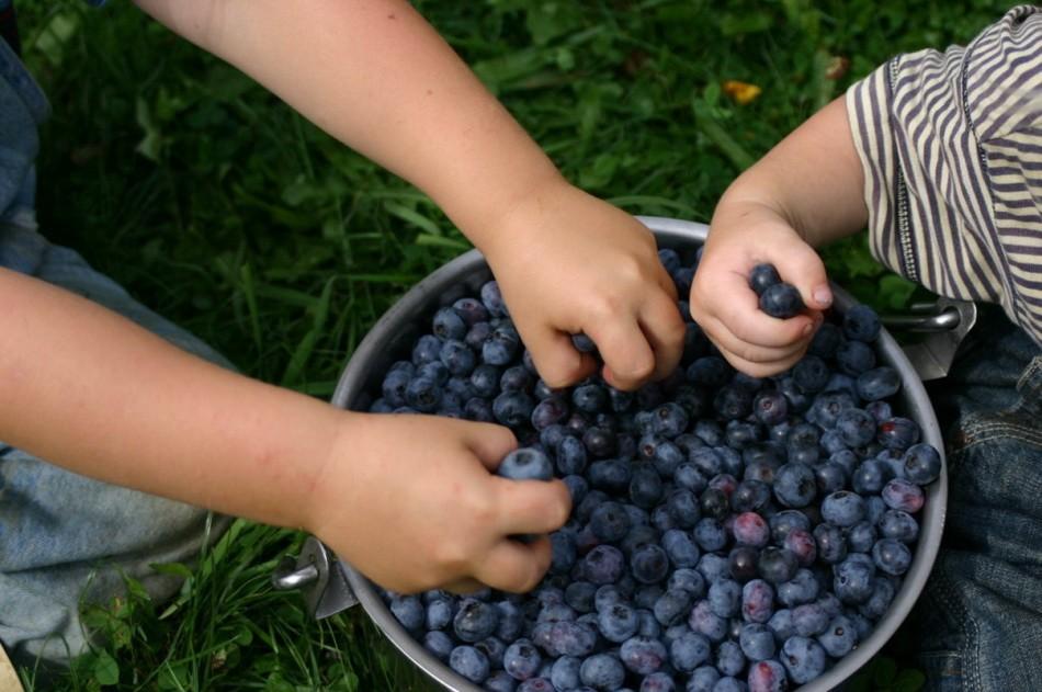 Если малыш плохо усваивает свежие ягоды, лучше предложить крохе компот или морс