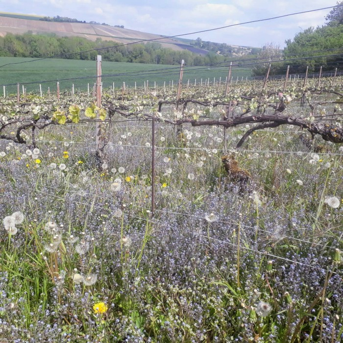 Champagne Solemme biodiversity in the vineyards