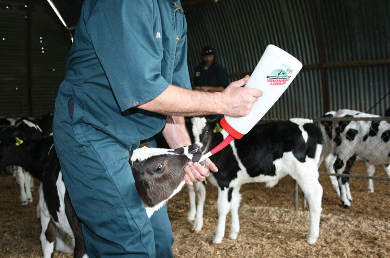 дренчер для телят, дренчер для коров, нву60, выпойка коров, выпойка телят