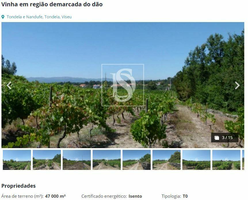 виноградник регион дао
