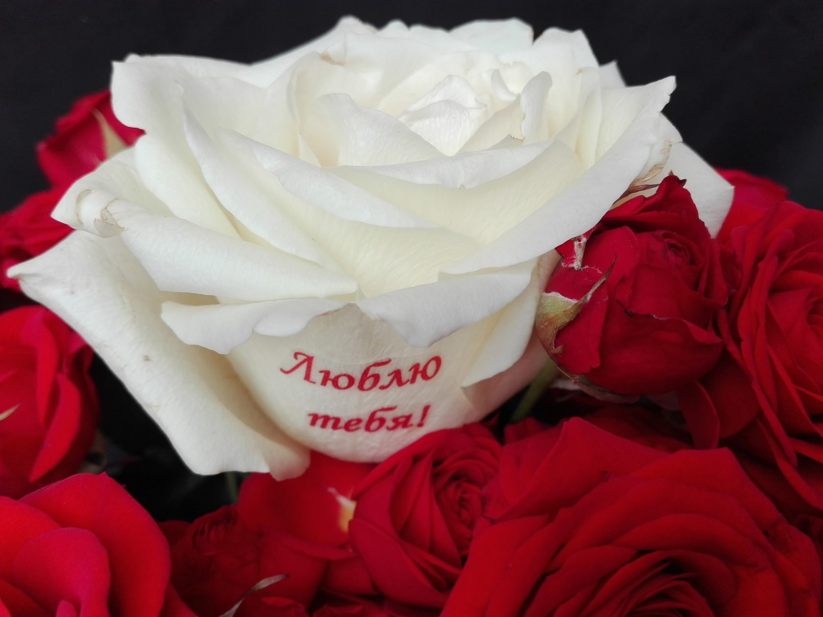 розы с поздравлениями на лепестках пришли мероприятие
