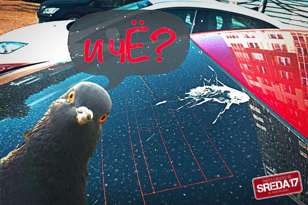 Как очистить птичий помет с кузова?