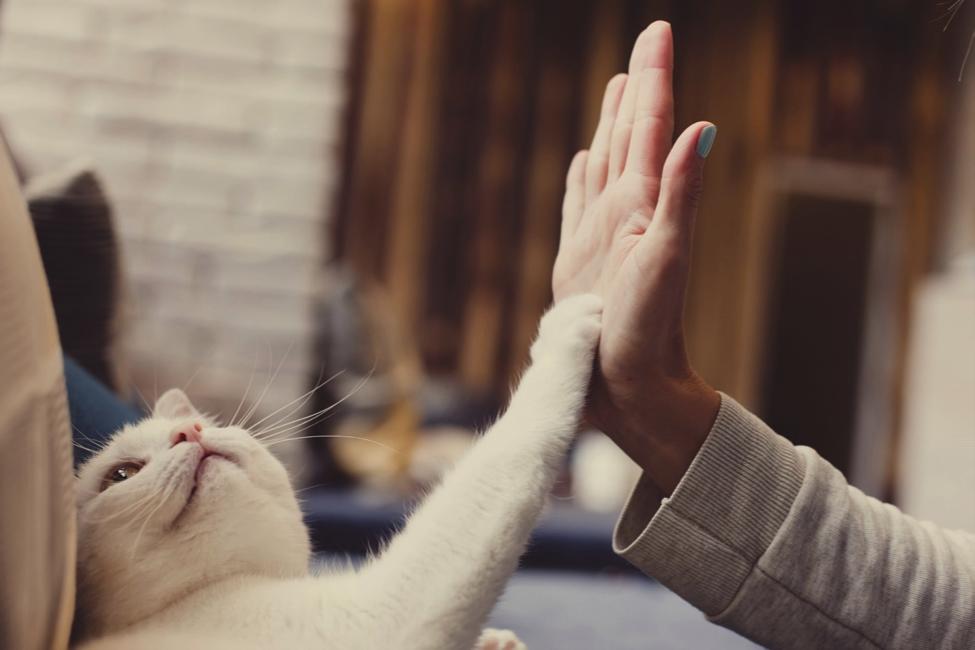 Как заработать на любви к котикам