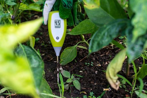 Чтобы подкислить почву голубики нужно измерить кислотность почвы и воды для полива