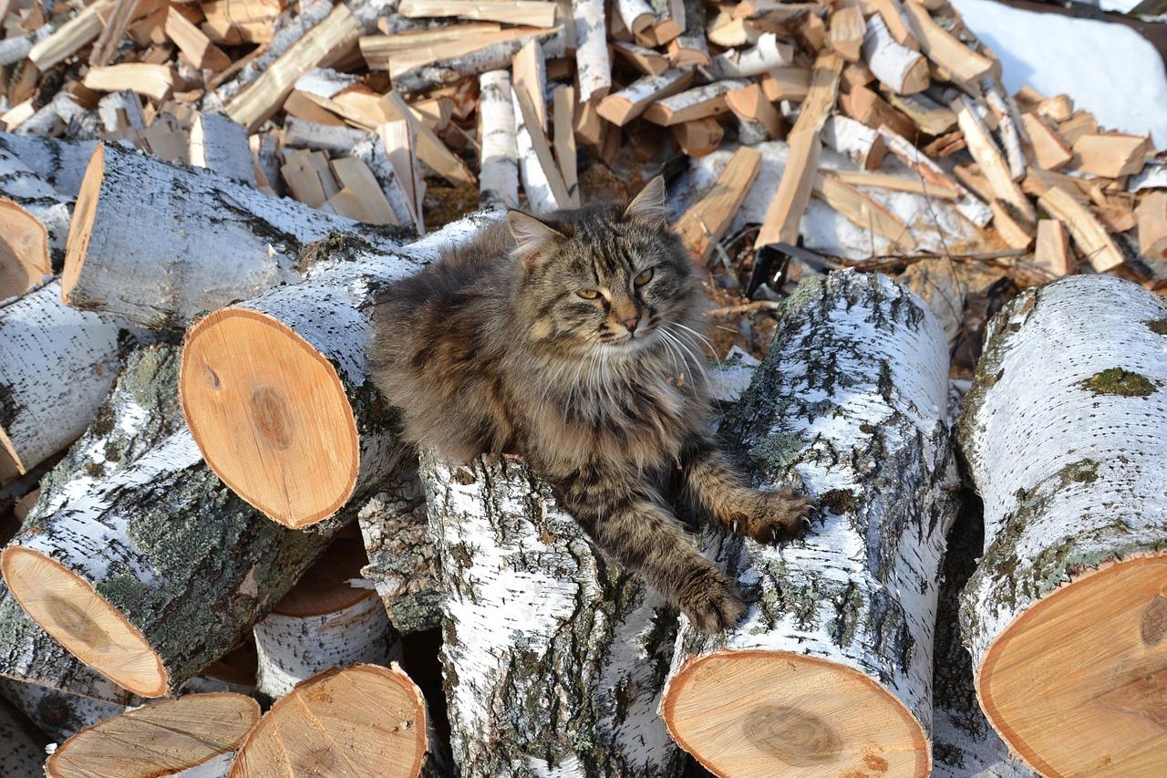 кошка на картинке с дровами нам лишь осталось