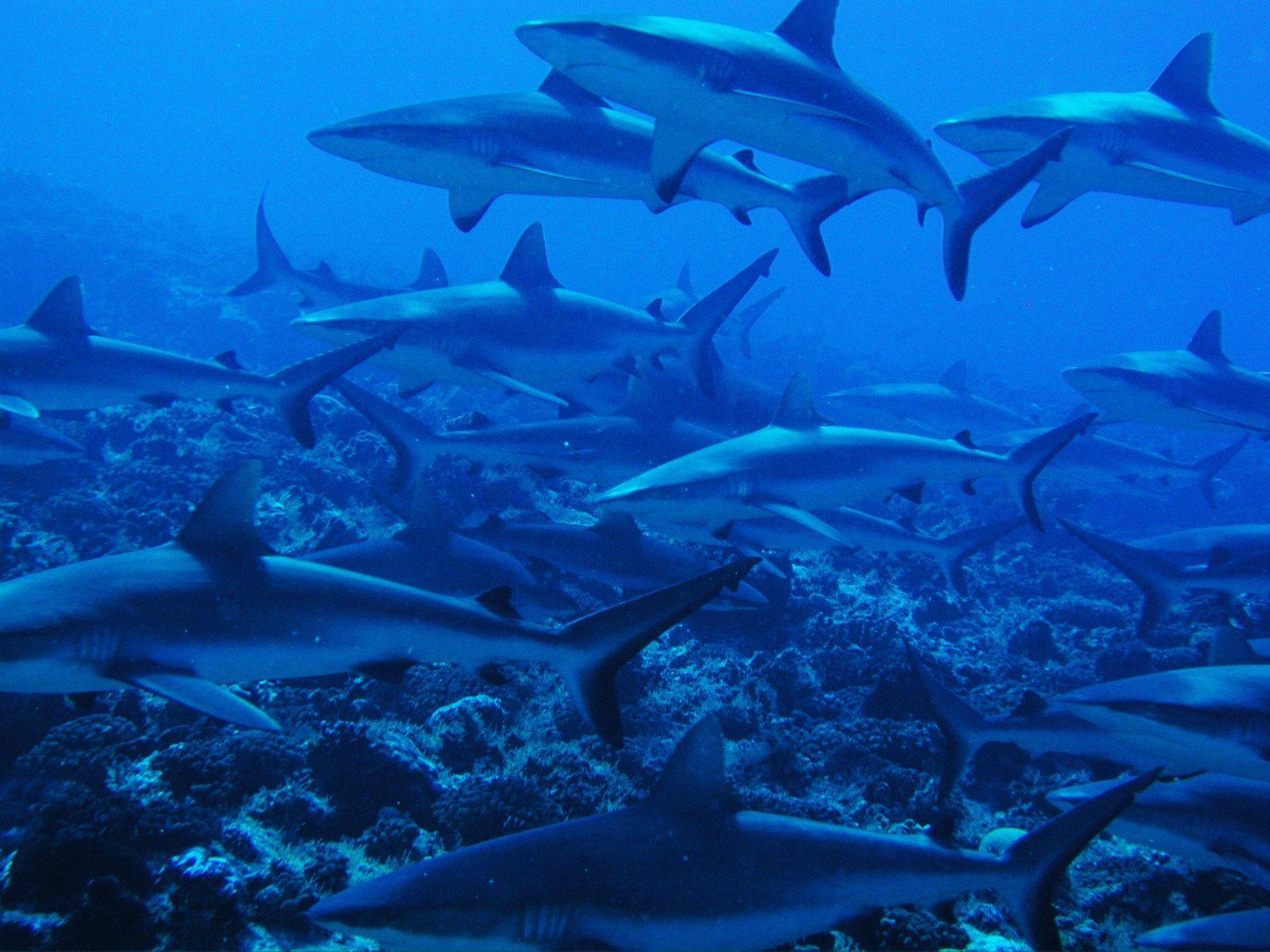 фото много акул проявления пятен