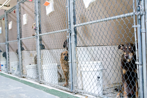 Сео продвижение сайта питомника (кошка или собака) может представлять значительную проблему