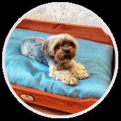 Комфортные лежанки для собак