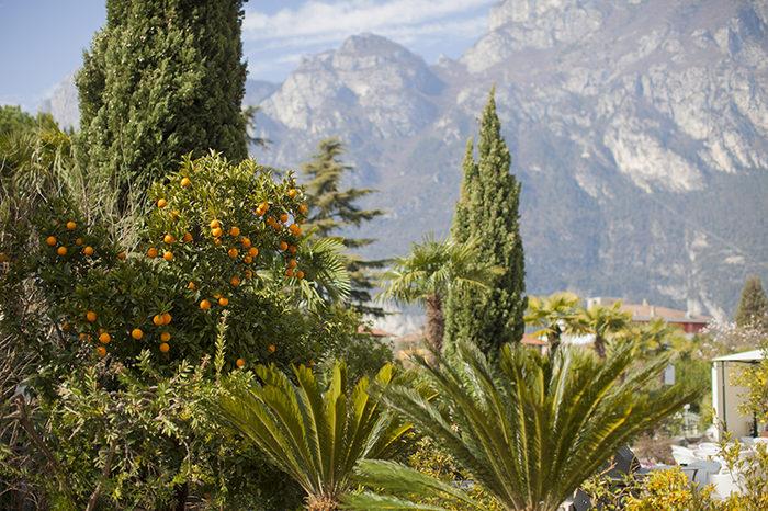 Лимонные сады на озере Гарда фото