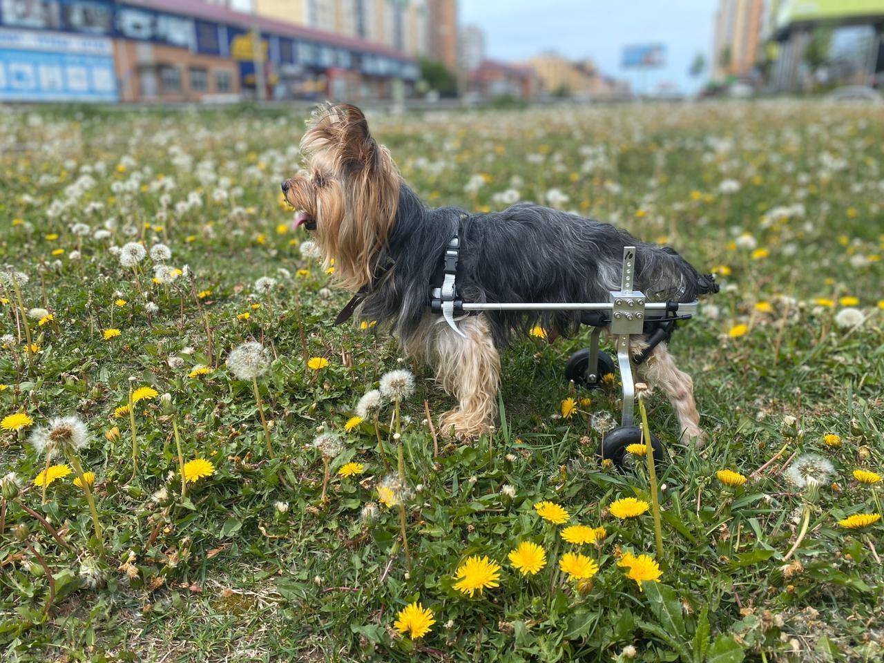 Инвалидная коляска для маленьких и больших собак.