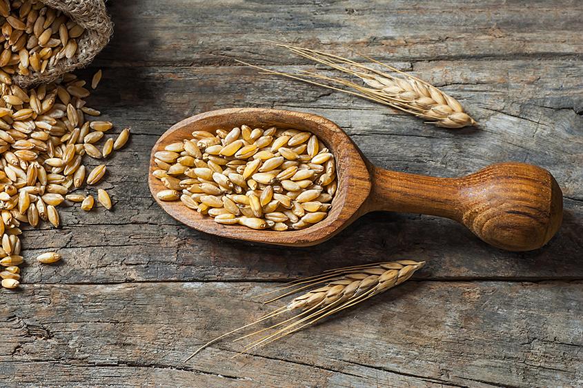 Пшеница Krina