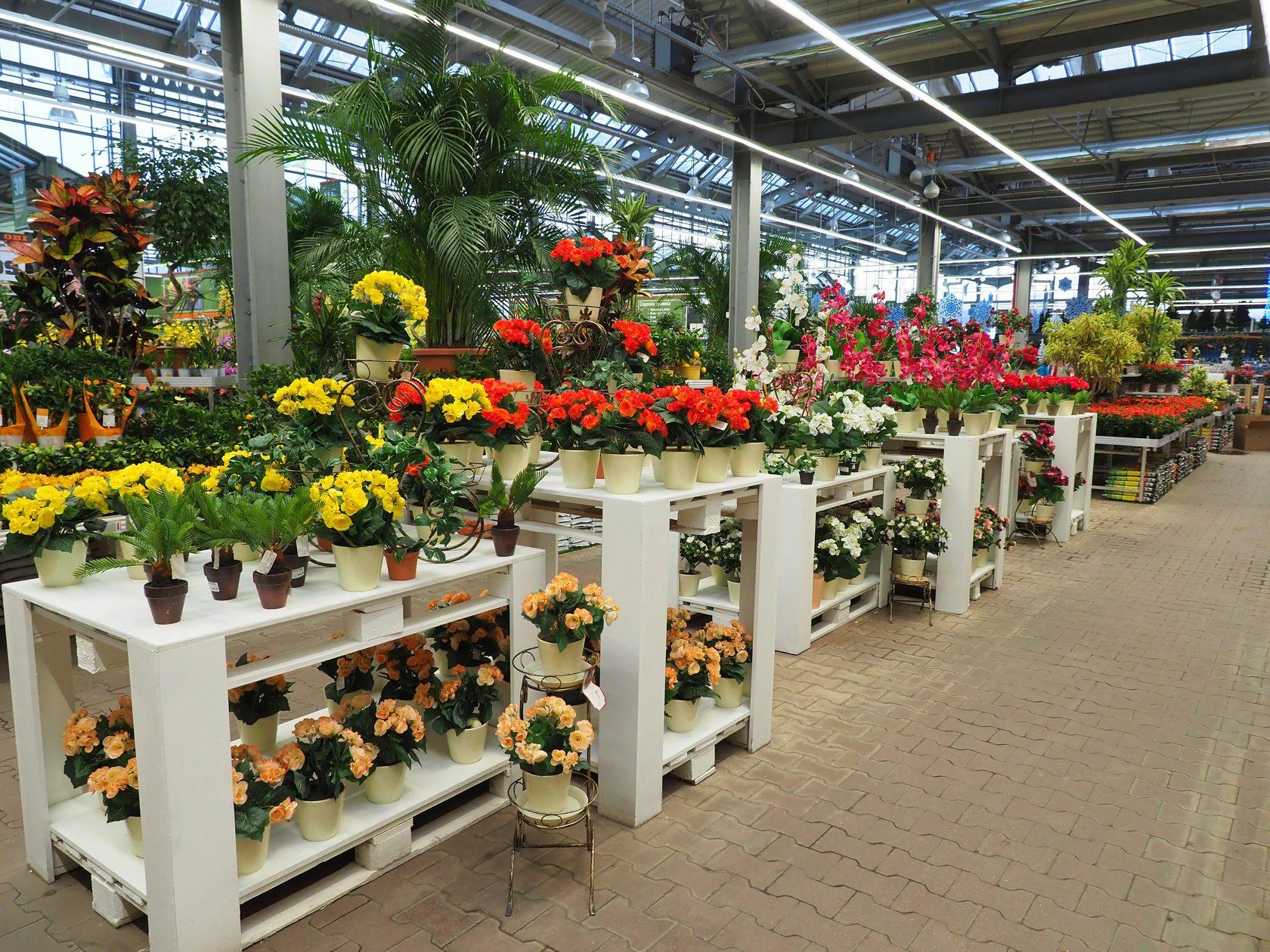 Магазин цветы, белая дача цветы купить