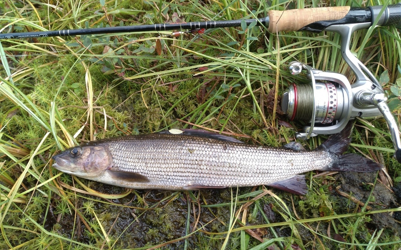 Рыбалка на вуве мурманская область